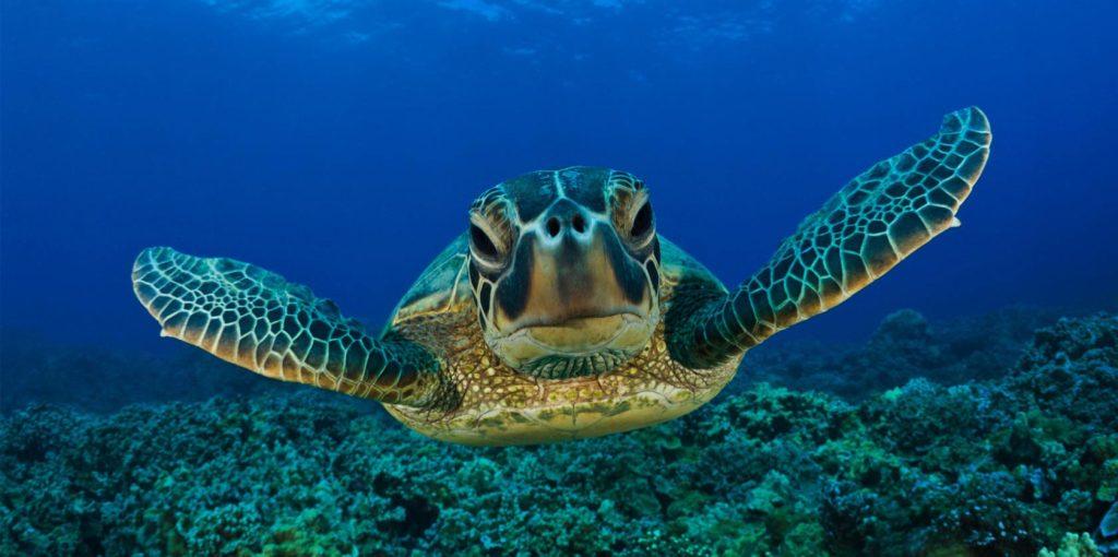 huatulco-sea-turtle