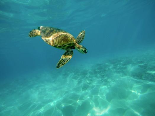 Akumal, le paradis des tortues et des plongeurs