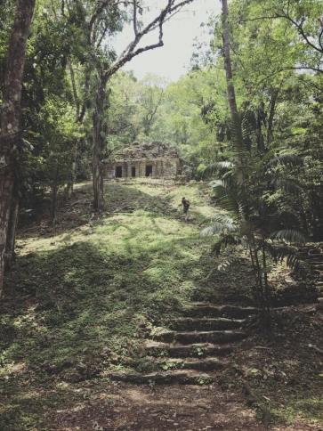 La jungle reprend ses droits dans la forêt de Lacandona