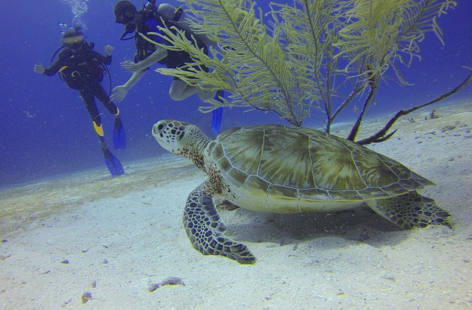 turtle-588497_1280